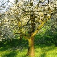 Frühlingsparadies