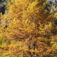 Herbstparadies